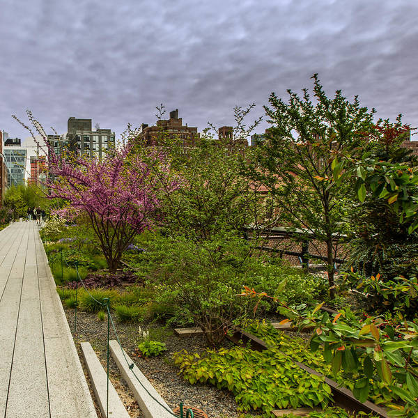Photograph - Walking Along The Ny High Line by Dave Hahn