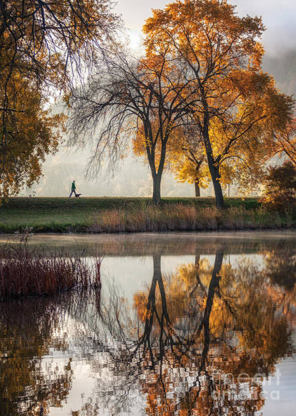 Photograph - Walking Among Giants By Winona Photographer by Kari Yearous