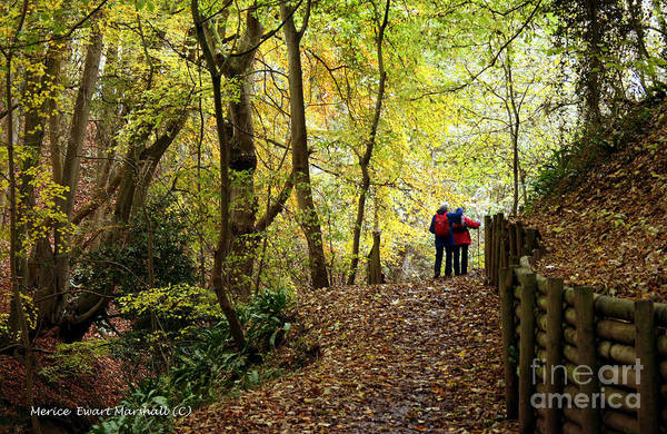 Wall Art - Photograph - Walking Danes Dyke Woods by Merice Ewart