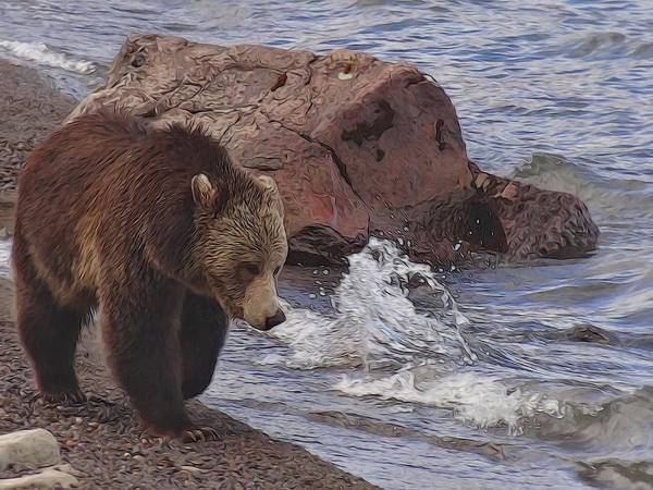 Grizzly Bears Digital Art - Walking Grizzly Bear On Lakeshore by Dan Sproul
