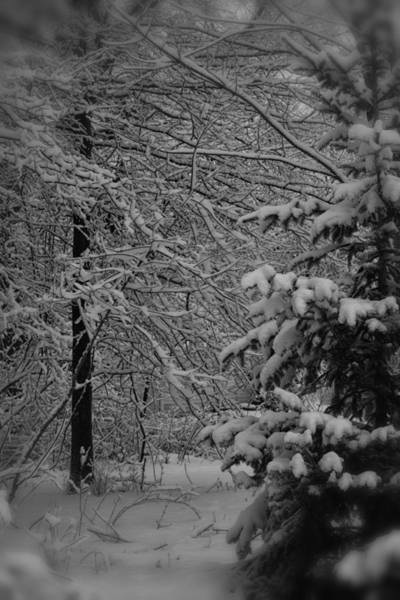 Wall Art - Photograph - Walking In A Winter Wonderland by Fresh Focus Photography