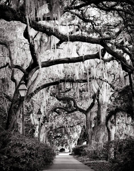 Photograph - Walking In Forsyth Park In Black And White by Val Stone Creager