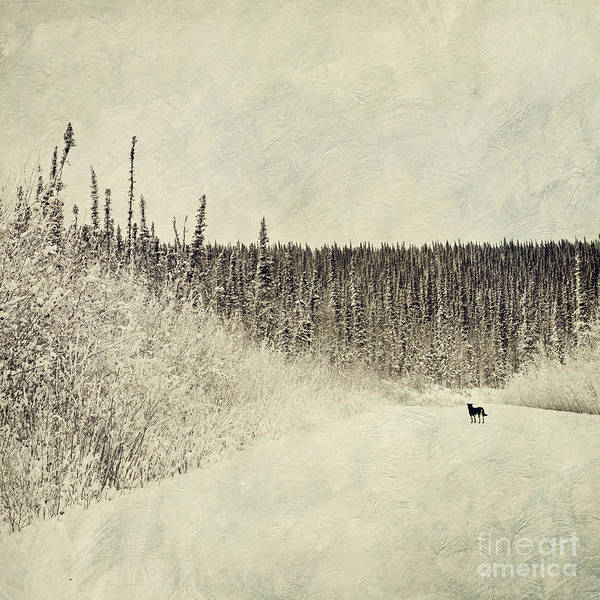 Wall Art - Photograph - Walking Luna by Priska Wettstein