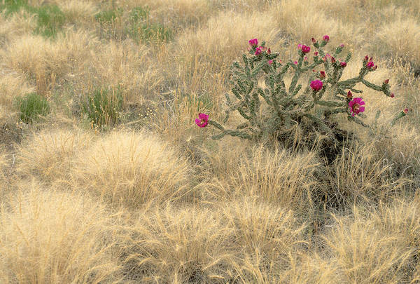 Wall Art - Photograph - Walking-stick Cactus In Bloom by James Steinberg