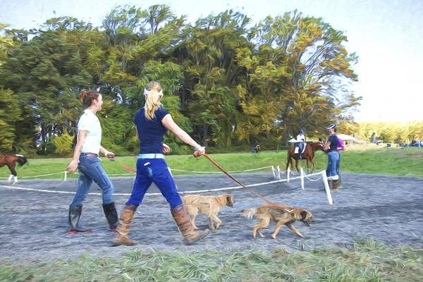Fairhill Photograph - Walking The Dogs by Alice Gipson