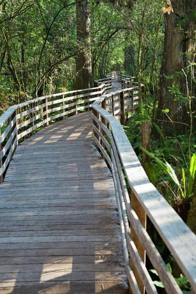 Wildlife Sanctuary Photograph - Walkway In A Nature Reserve by Jim West