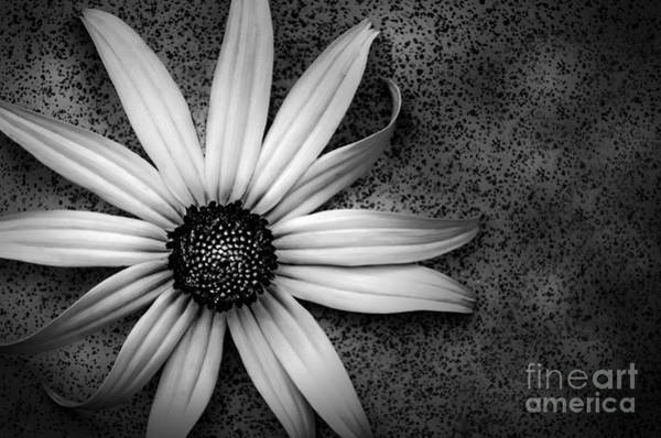 Photograph - Wall Flower by Michael Arend
