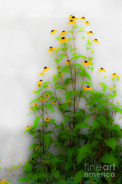 Photograph - Wall Flowers by Michael Arend