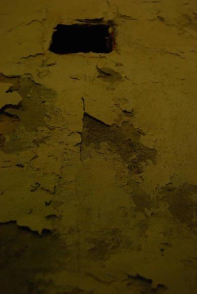 Photograph - Wall Green by Mira C