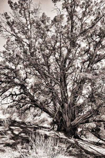 Wall Art - Photograph - Wall Tree by Juan Carlos Diaz Parra