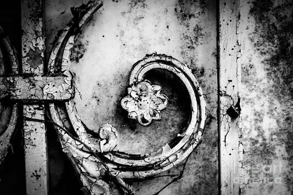 Fleur De Lis Photograph - Wallflower by Dean Harte