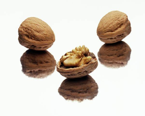 Walnut Photograph - Walnuts by Ton Kinsbergen/science Photo Library