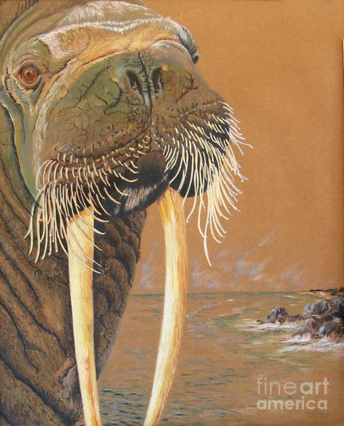 Drawing - Walrus by Nancy  Parsons