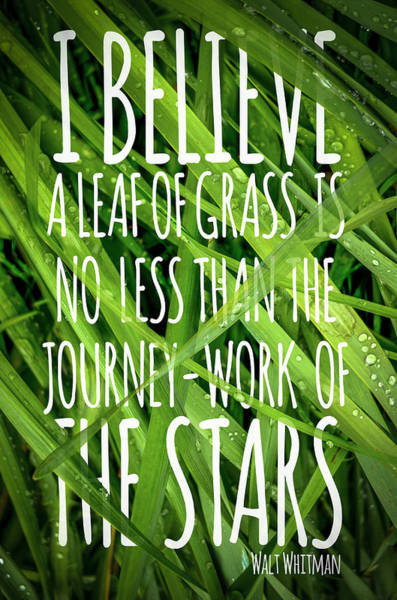 Wall Art - Photograph - Walt Whitman Quote Poster With Grass by Mr Doomits