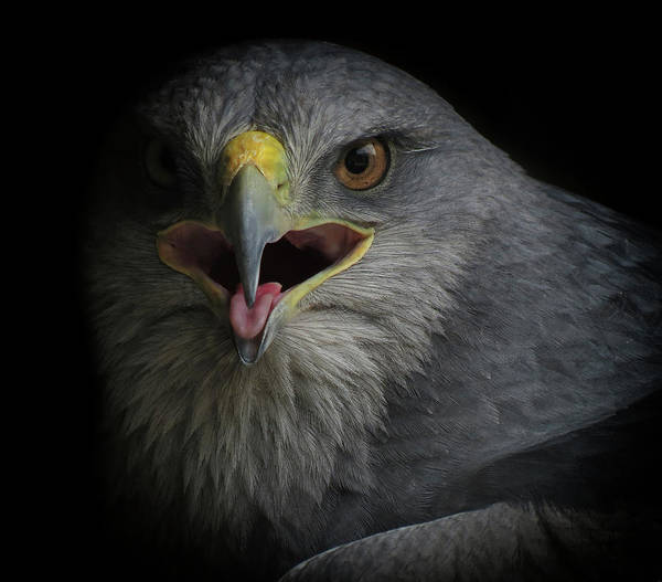 Beak Photograph - War Cry by Ferdinando Valverde