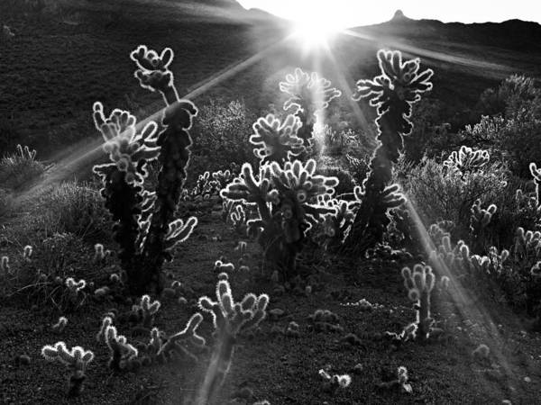 Photograph - Warm Desert Sunrise by Leland D Howard