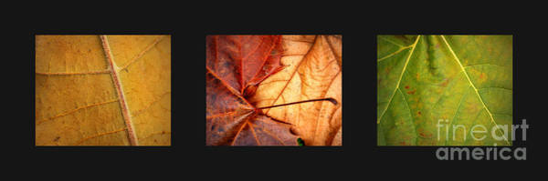 Photograph - Warm Glowing Leaves Collage by Carol Groenen
