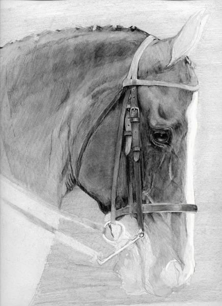 Warmbloods Drawing - Warmblood Head Study by Sara Cuthbert