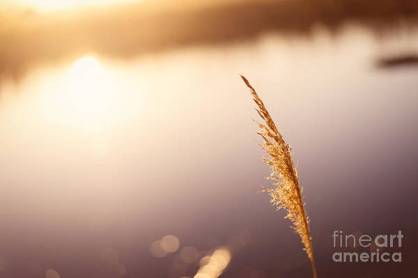 Nikon Wall Art - Photograph - Warmth by Michael Ver Sprill