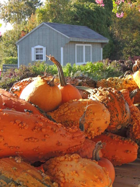 Photograph - Wart Gourds by Kimberly Perry