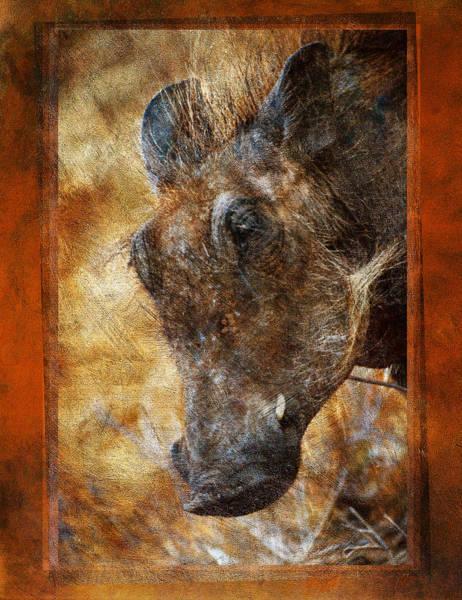 Photograph - Wart Hog by Mauro Celotti