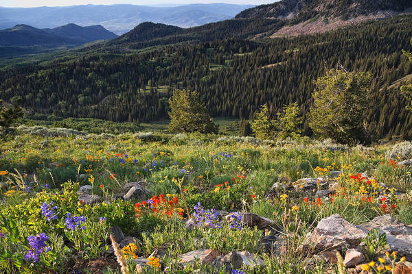 Heber Springs Photograph - Wasatch Mountains Of Utah by Douglas Pulsipher