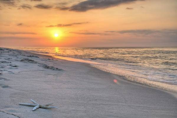 Photograph - Washed Up On Orange Beach by JC Findley