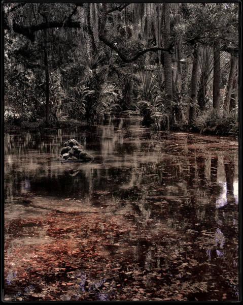 Photograph - Washington Oaks by Mario Celzner