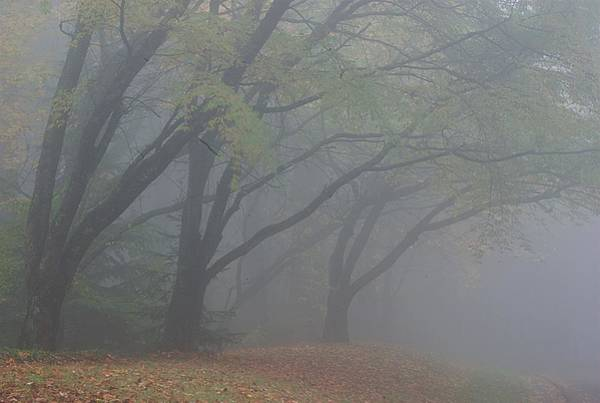 Photograph - Washington Park Fog 1 by Ken Dietz