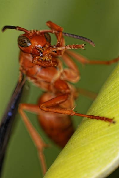 Wasp 3 Art Print