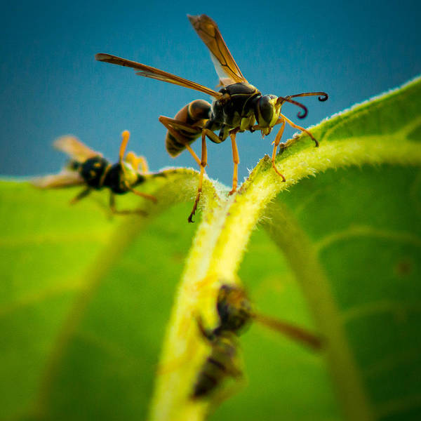 Photograph - Wasp by Chris Bordeleau