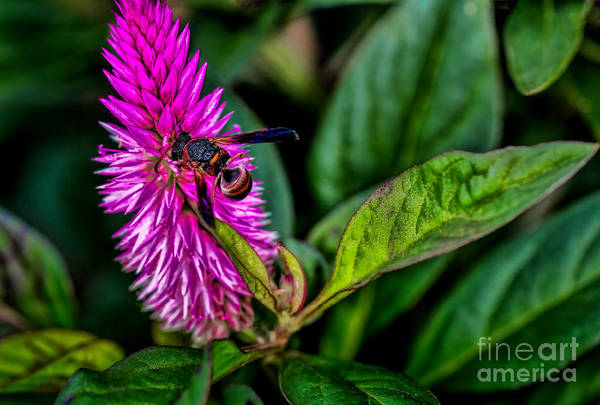 Photograph - Wasp by Dave Bosse