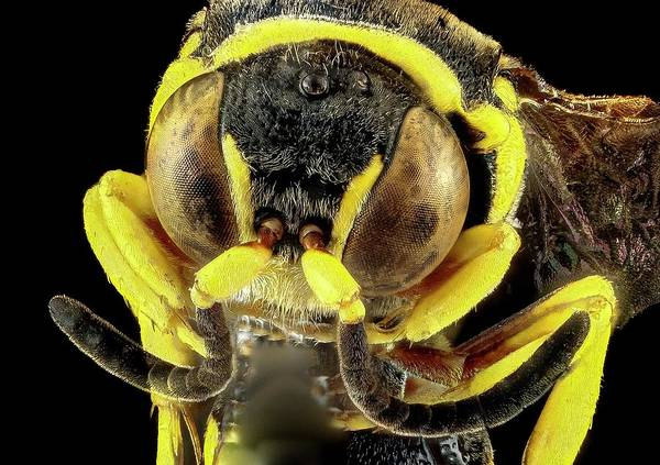 Wasp Photograph - Wasp by Us Geological Survey