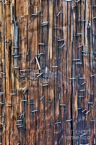 Wall Art - Photograph - Staples Covering A Telephone Pole by William Kuta