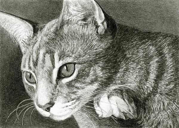 Drawing - Watchful by Ann Ranlett