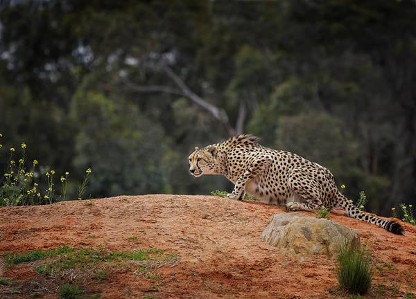 Photograph - Watchful Eye by Kim Andelkovic