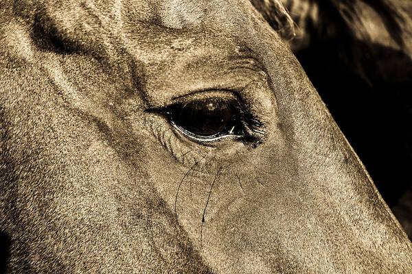 Elmendorf Photograph - Watchful Eyes by Norchel Maye Camacho
