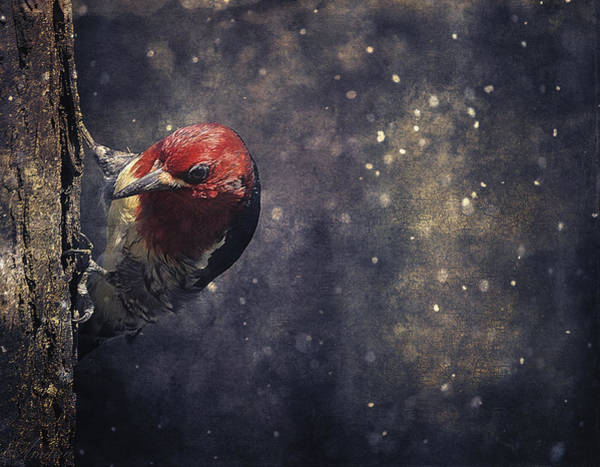Red Bellied Woodpecker Photograph - Watching Me by Maria Angelica Maira
