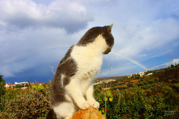 Photograph - Watching The Rainbow by Augusta Stylianou