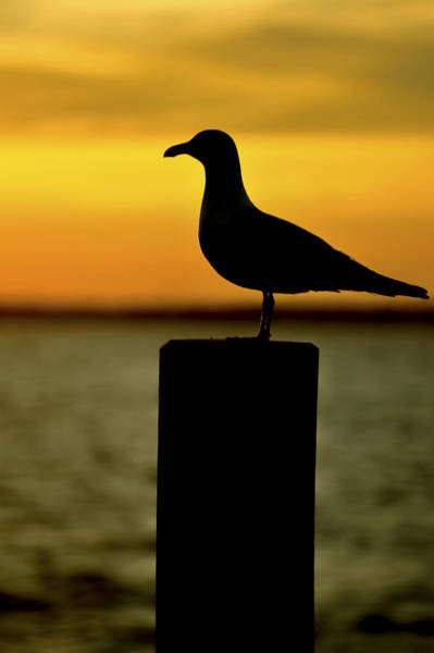 Photograph - Watching The Sunset Seaside Park Nj by Terry DeLuco