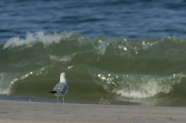 Photograph - Watching The Waves Seaside Park Nj by Terry DeLuco