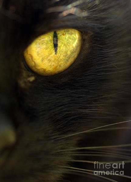 Black Cats Photograph - Watching You by Anne Gilbert