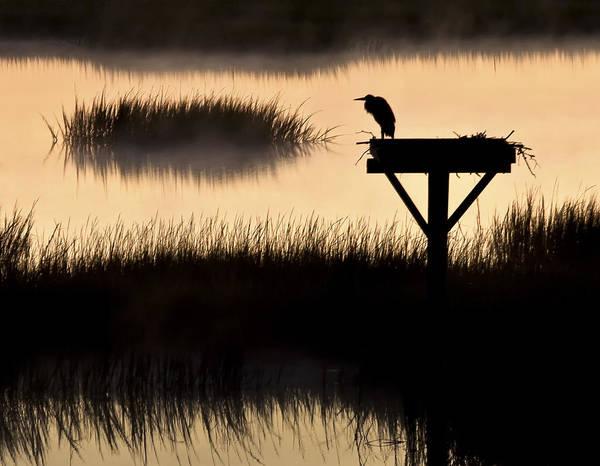 Photograph - Watchtower Heron Sunrise Sunset Image Art by Jo Ann Tomaselli