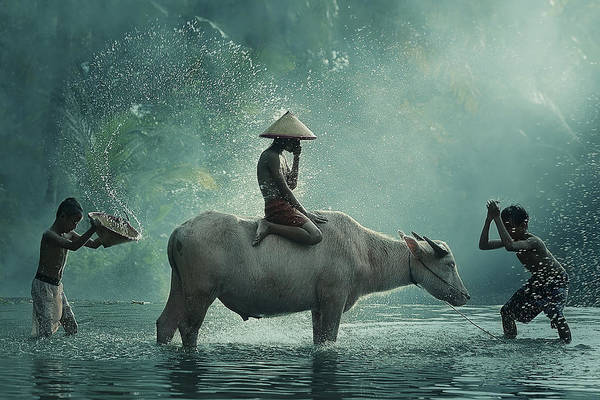 Wall Art - Photograph - Water Buffalo by
