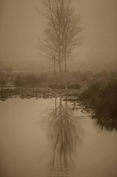 Water Buffalo Morning Fog Art Print