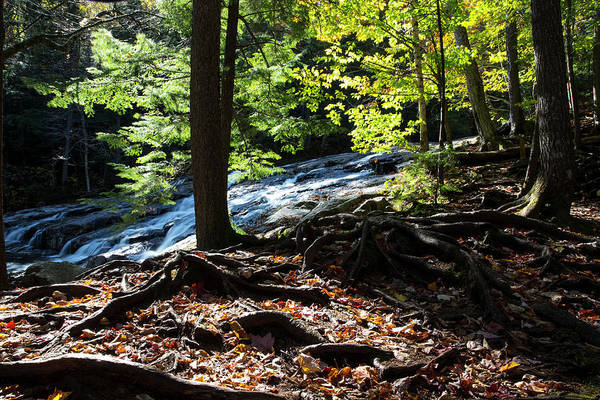 Franconia Notch State Park Photograph - Water Cascades Down A Forested Slope by Robbie George