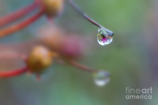 Photograph - Water Drop Reflection by Dan Friend