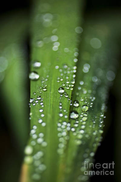 Photograph - Water Droplets On Grass by Charmian Vistaunet