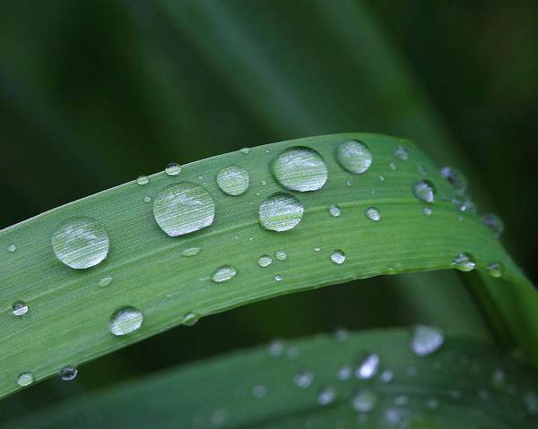 Photograph - Water Drops On Grass by Angela Murdock