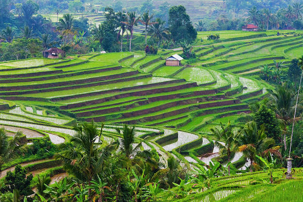 Terrace Photograph - Water-filled Rice Terraces, Bali by Keren Su